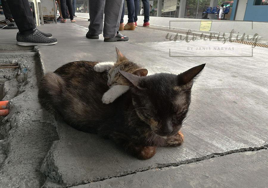 cats on a PNR station