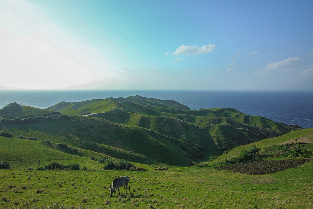 Rolling hills facing the sea